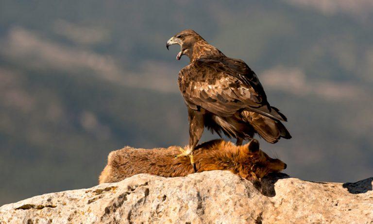 Experiencias Sierra Espuña. Entre aves