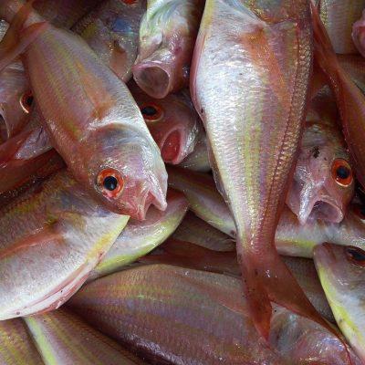Mercado de Abastos. Alhama de Murcia. Sierra Espuña