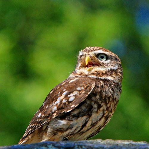 owl-275940_1280